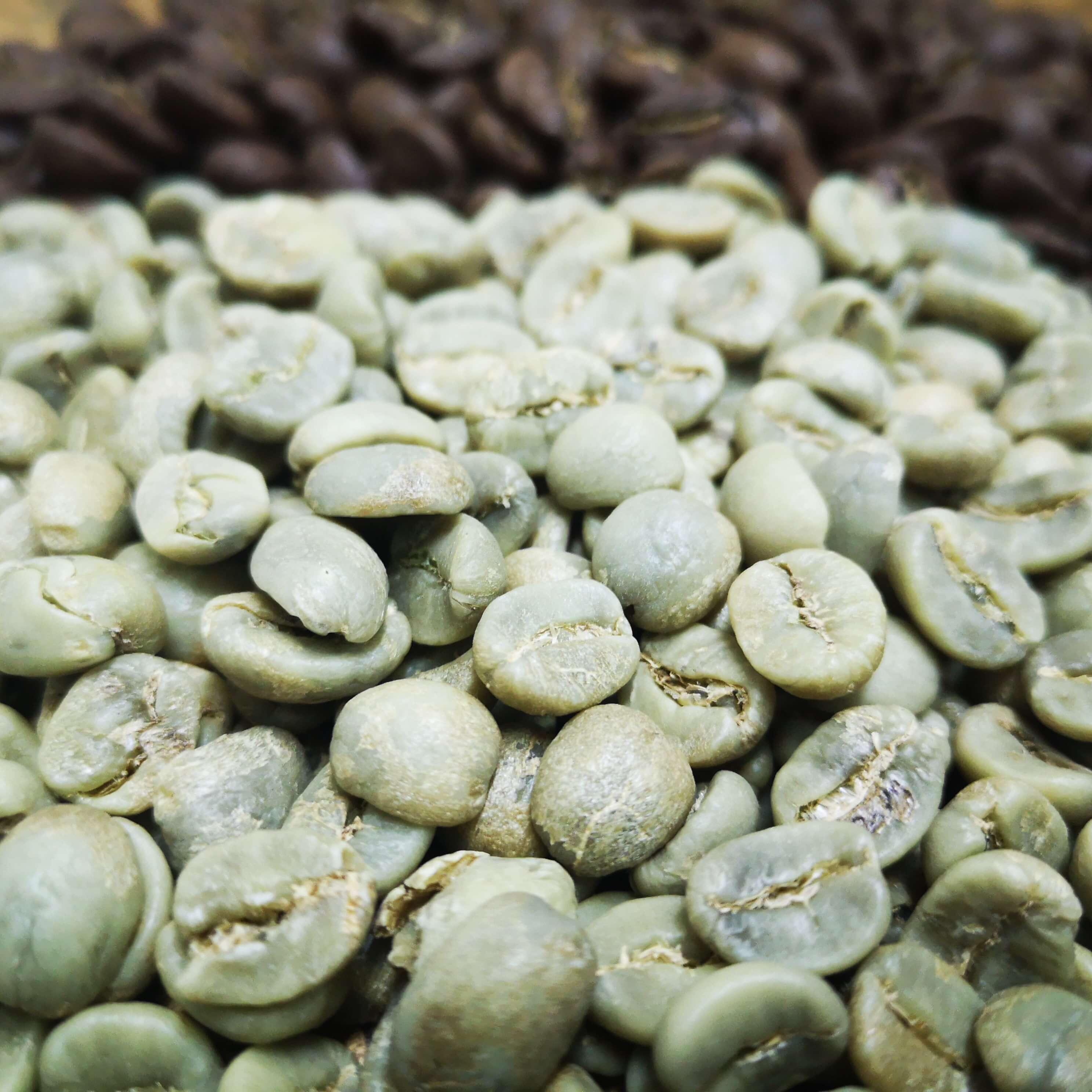 Café vert du Nicaragua Maracaturra